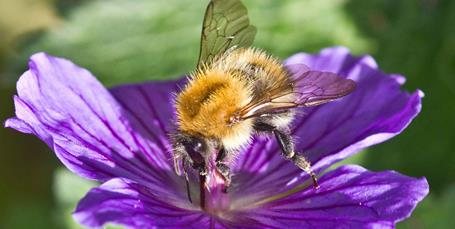 Vil EU redde bierne?