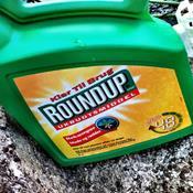 Regeringen vil forbyde Roundup i haver