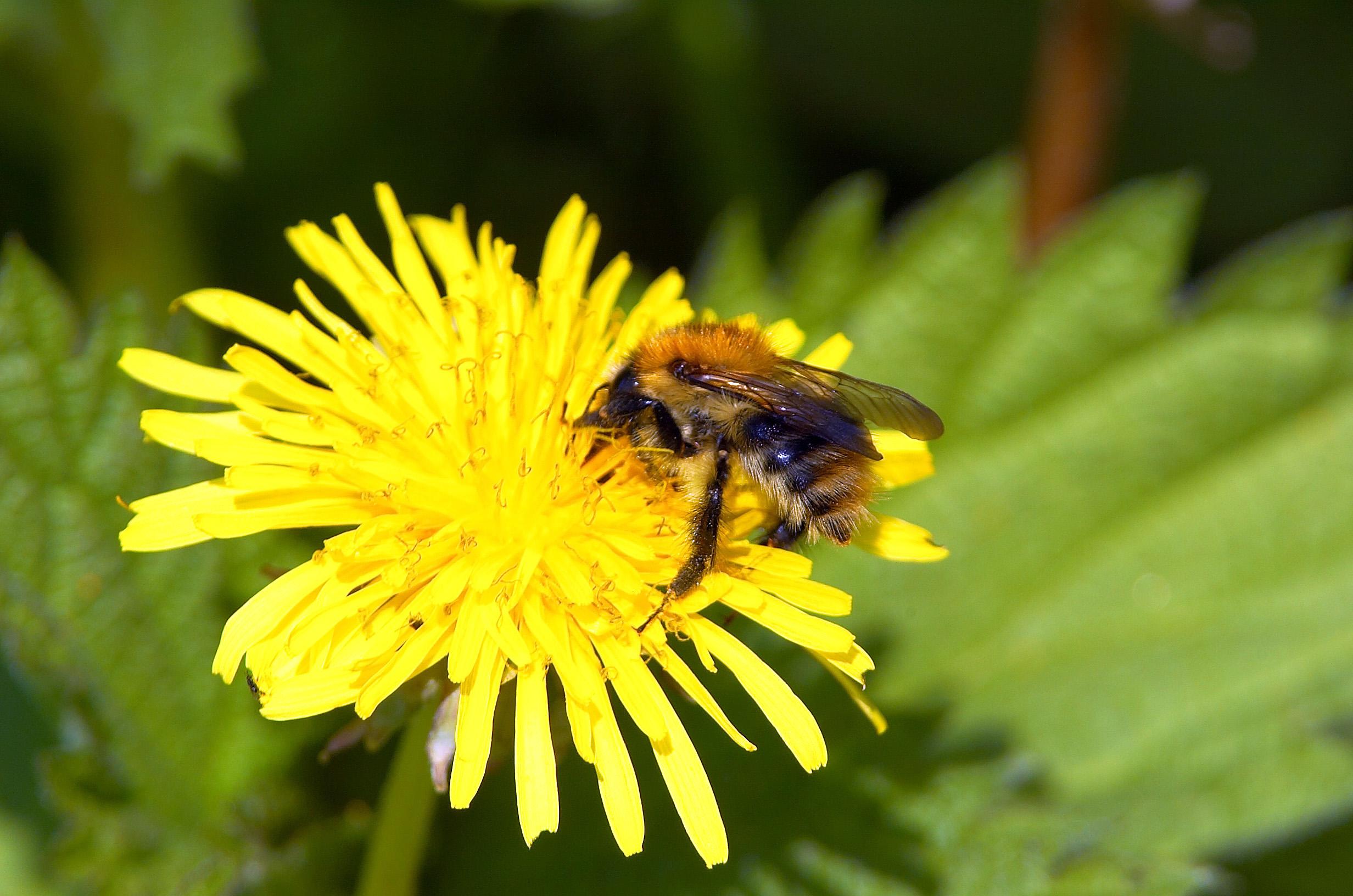 Guide: Sådan bygger du hoteller til insekterne i din have