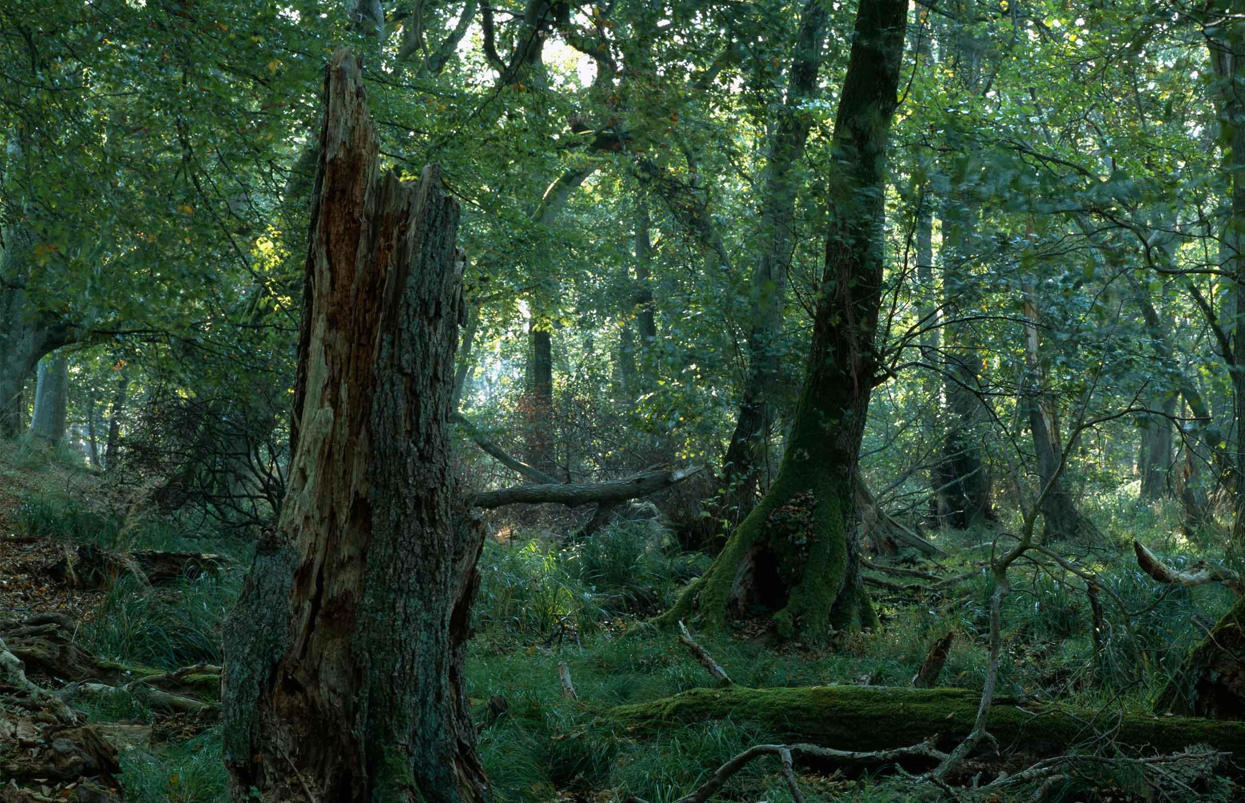 Naturen kan komme klimaet til undsætning - hvis den får plads
