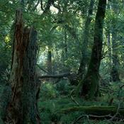 10 forslag fra danskerne: Her skal naturnationalparkerne ligge