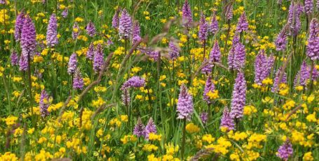Truet bi lever i fredet natur