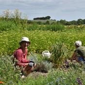 Økologisk køkkenhave skaber venskaber