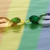 Naturen er mangfoldig og homoseksuel
