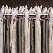Midlertidige fiskeforbud redder ikke ålen