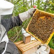 Bekymrede biavlere: Vi har et stort problem