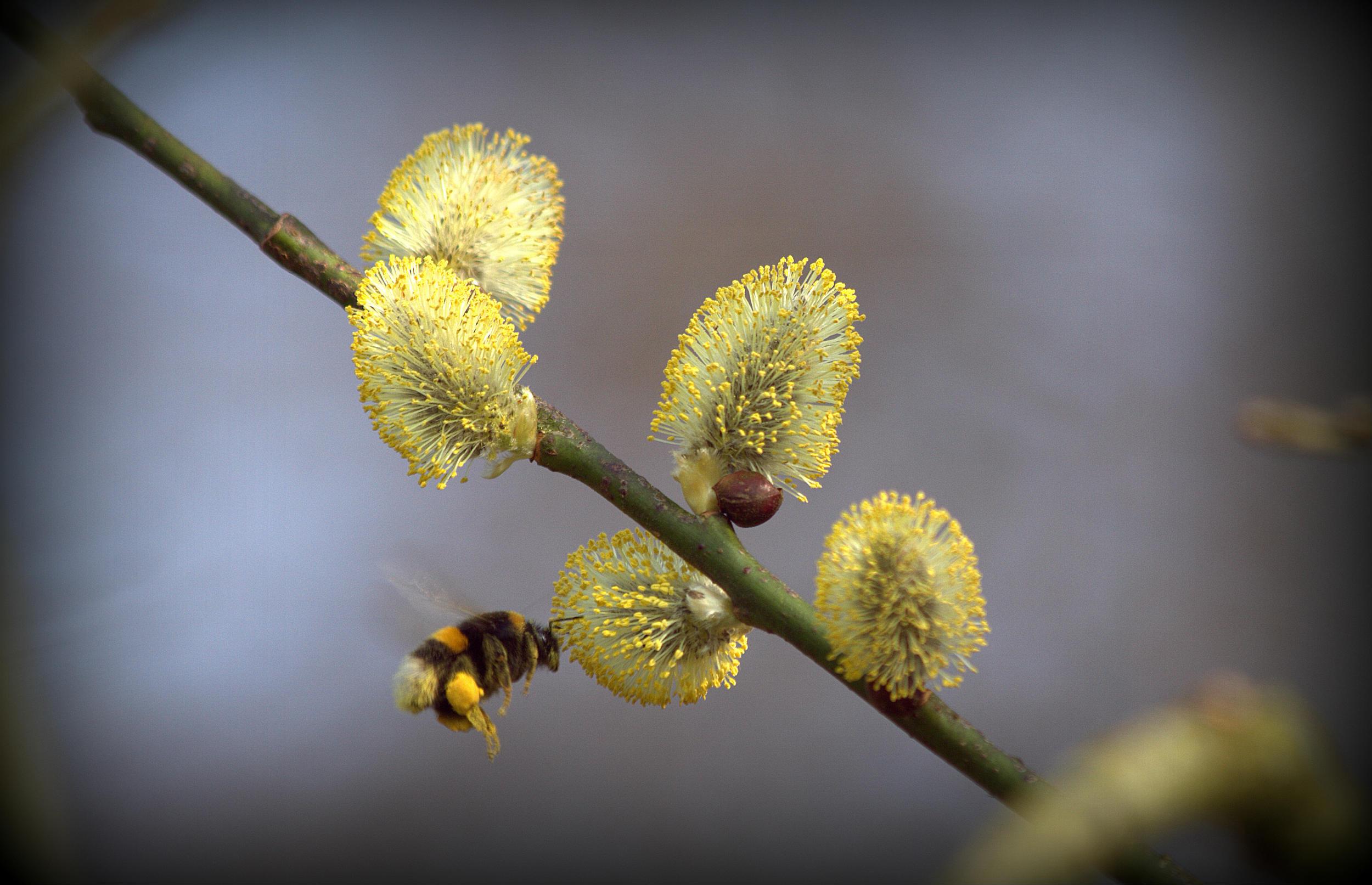 5 tips: Sådan hjælper du vores hårdt pressede bier