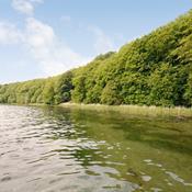 Den Danske Naturfond vil genoprette skov ved Flensborg Fjord