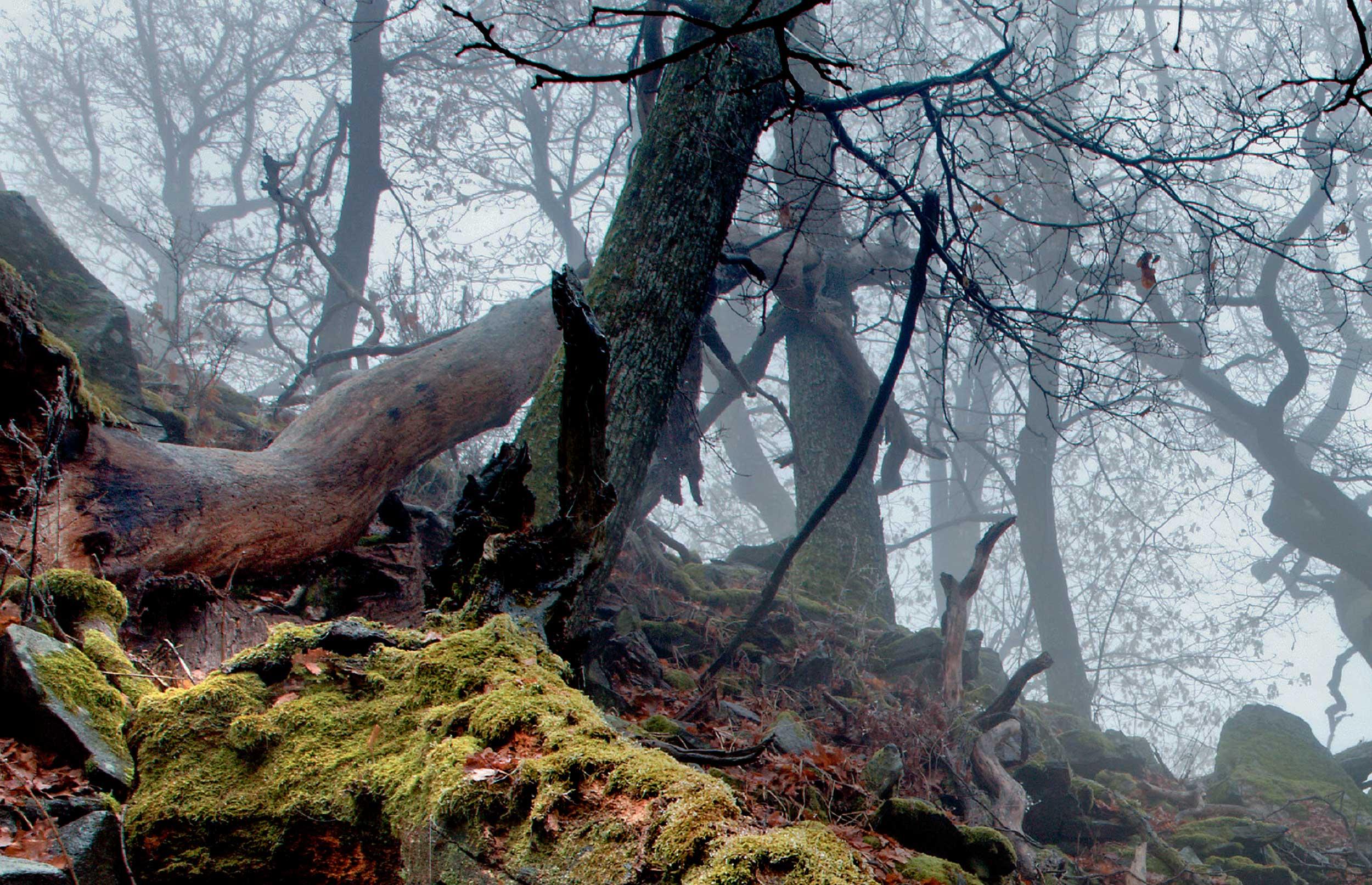Det haster med vildere skove