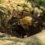 Nye regler for rottegift skader andre dyr
