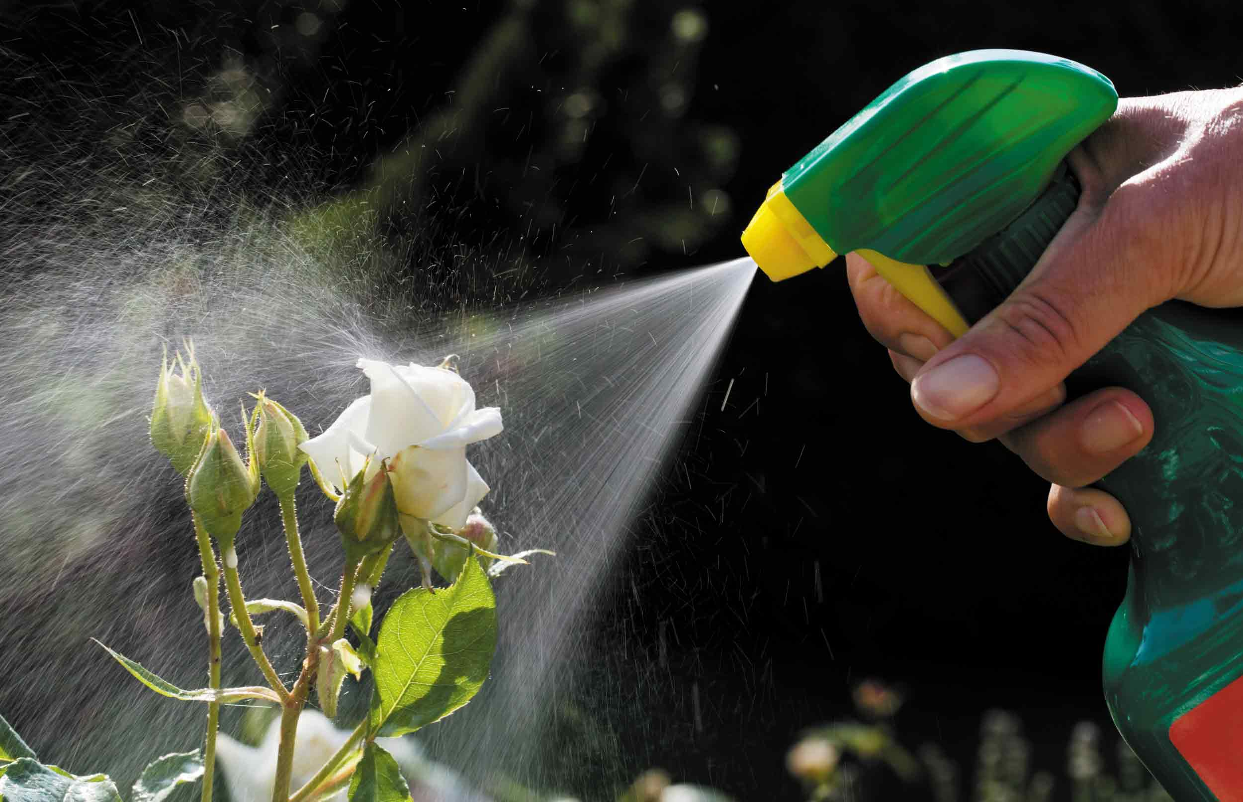 Markant mindre forbrug af sprøjtegifte i private haver