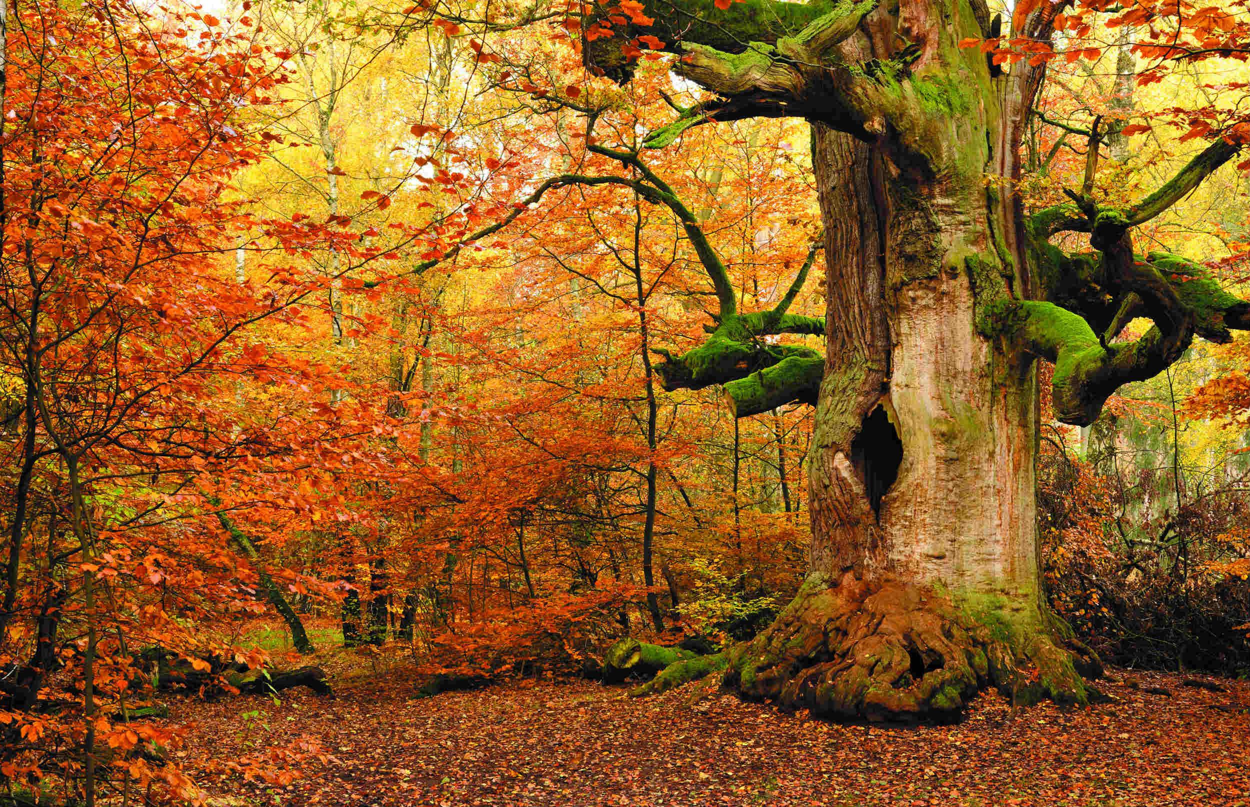 Mere urørt skov skal styrke naturen