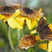 Sådan får du flere sommerfugle i haven