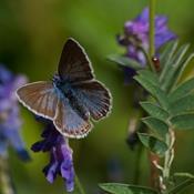 6 trin til flere sommerfugle i din have