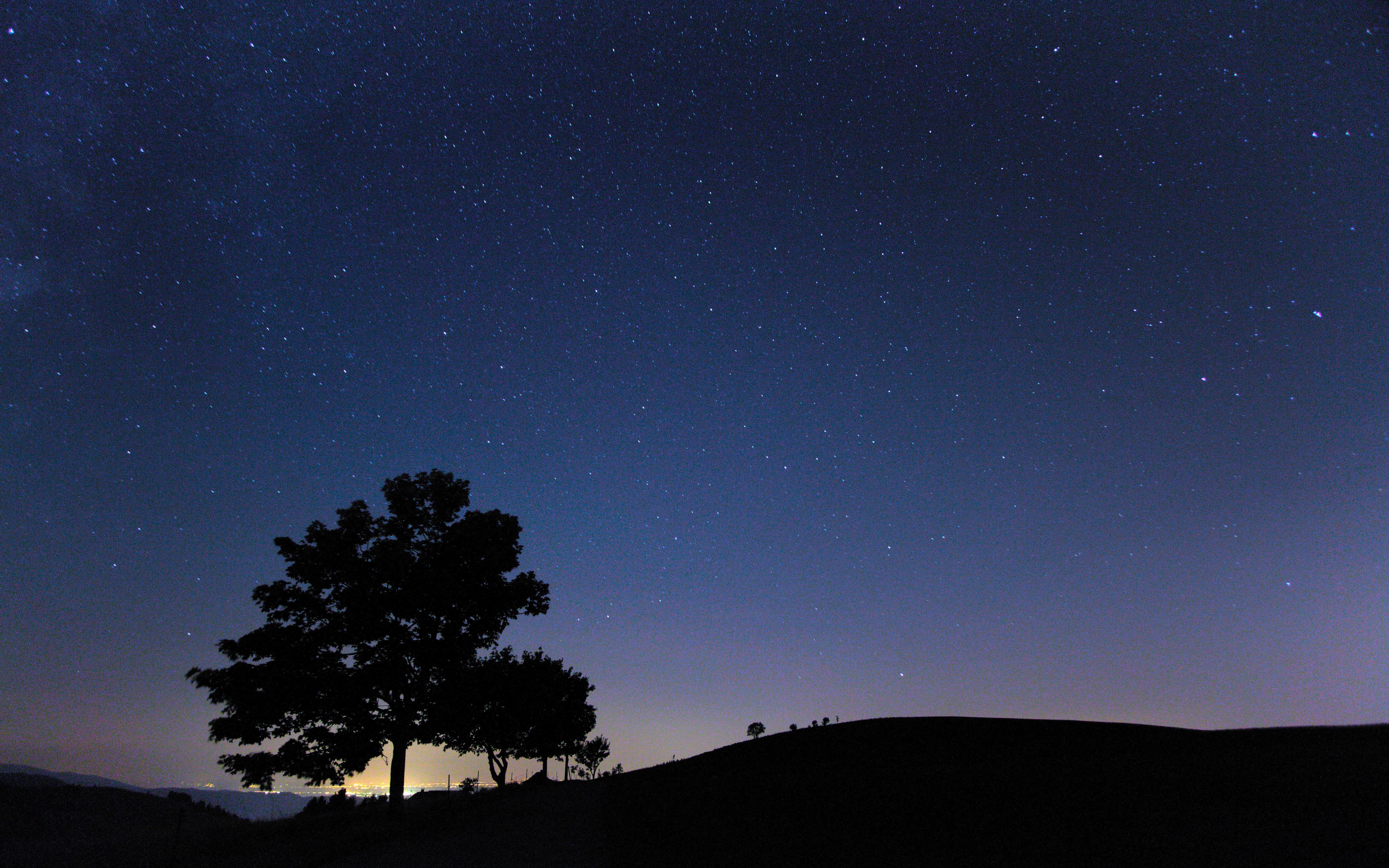 5 sjove aktiviteter du kan lave om natten i naturen