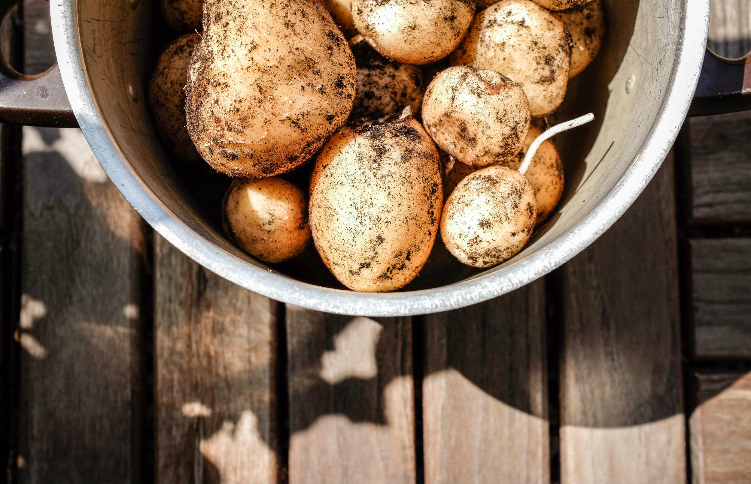 Kartofler bliver sprøjtet over 13 gange om året