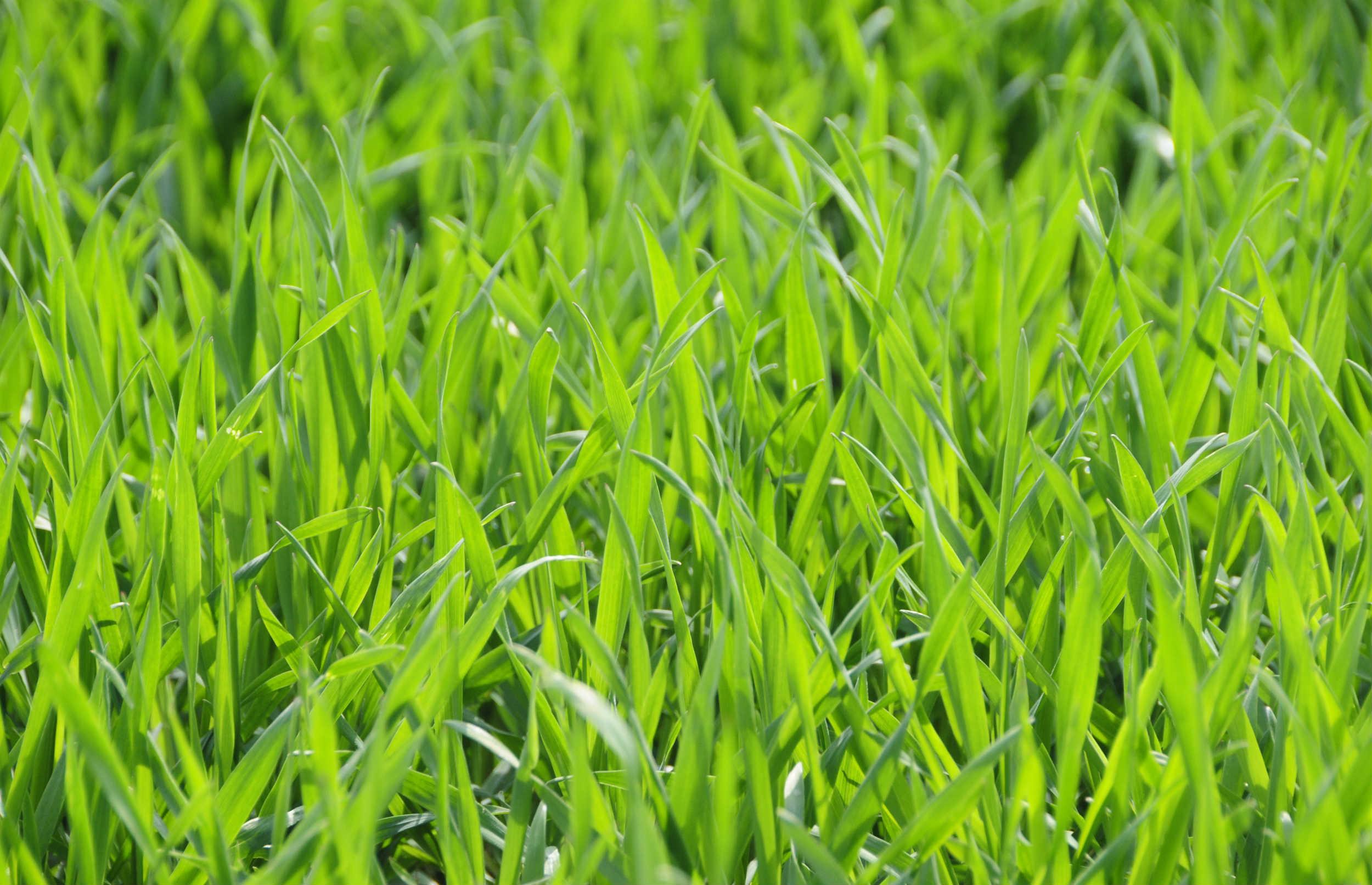 Sådan kan landbruget mindske udledningen af drivhusgasser