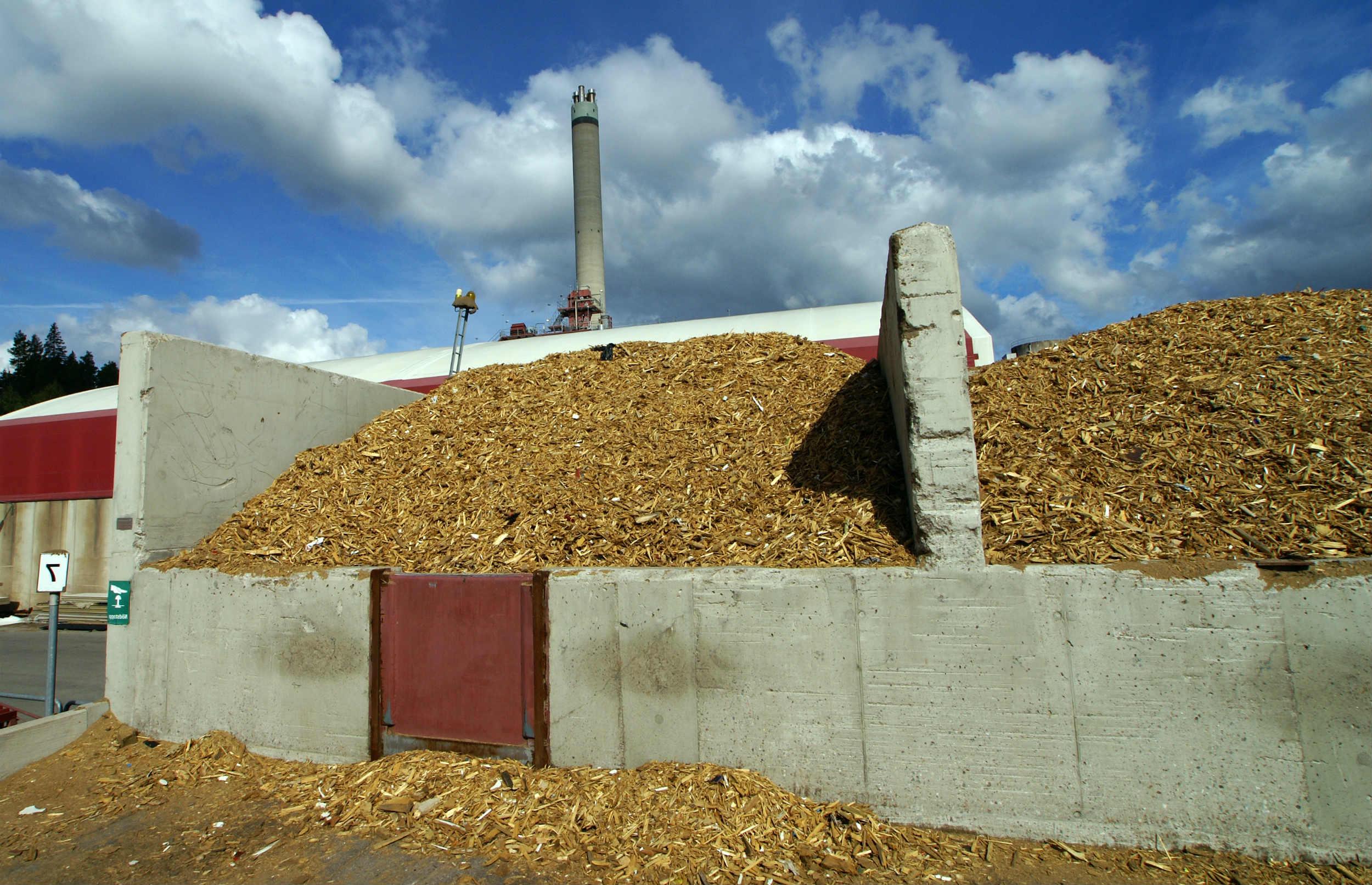 Hvad er biomasse? Og hvorfor løser det ikke vores klimaproblemer?