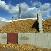 Varmeproduktion lægger pres på gamle træer i Danmark