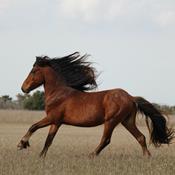 Mød Danmarks vildeste heste