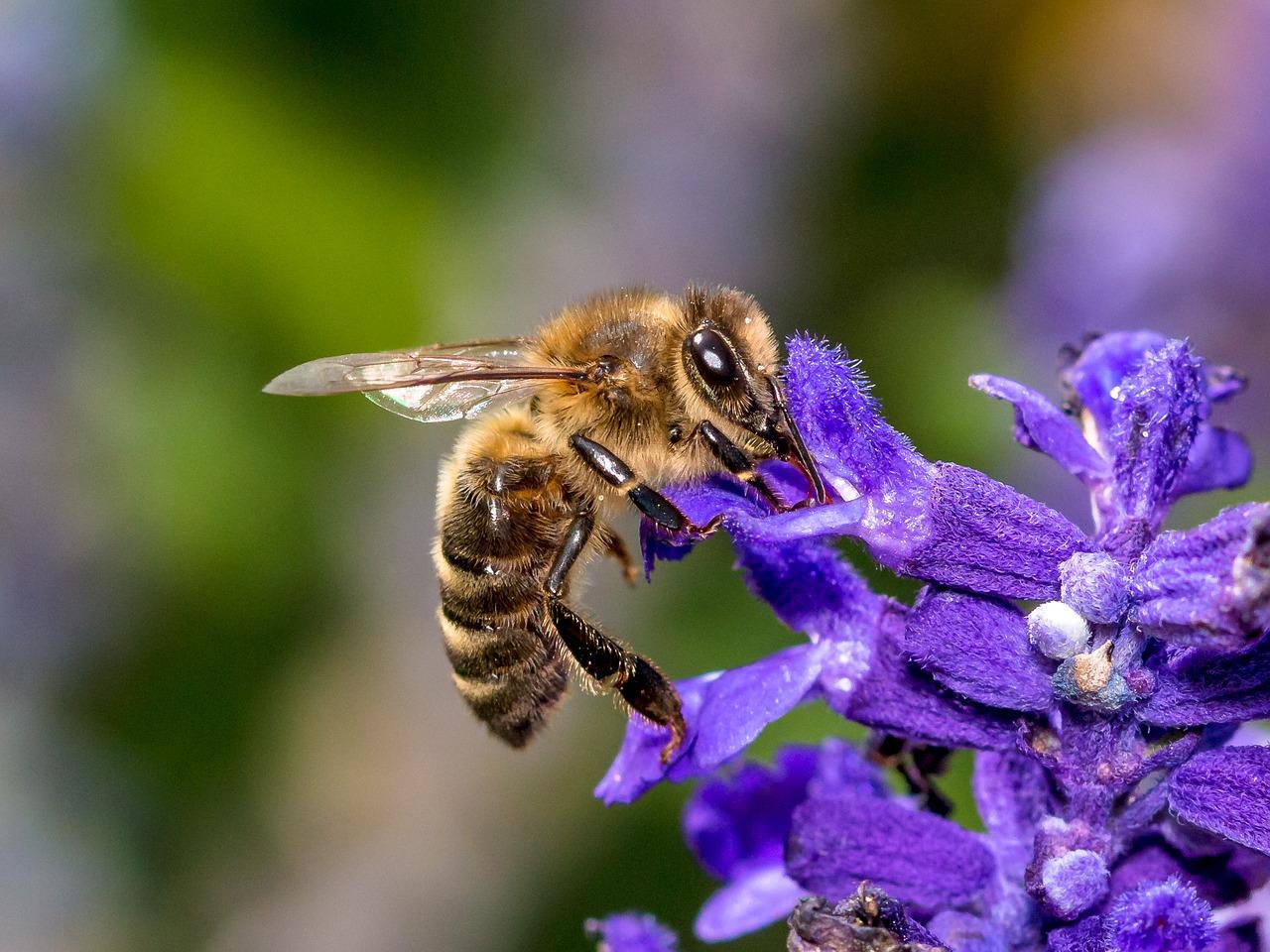 Videnskabeligt forsøg: Roundup kan gøre bier syge