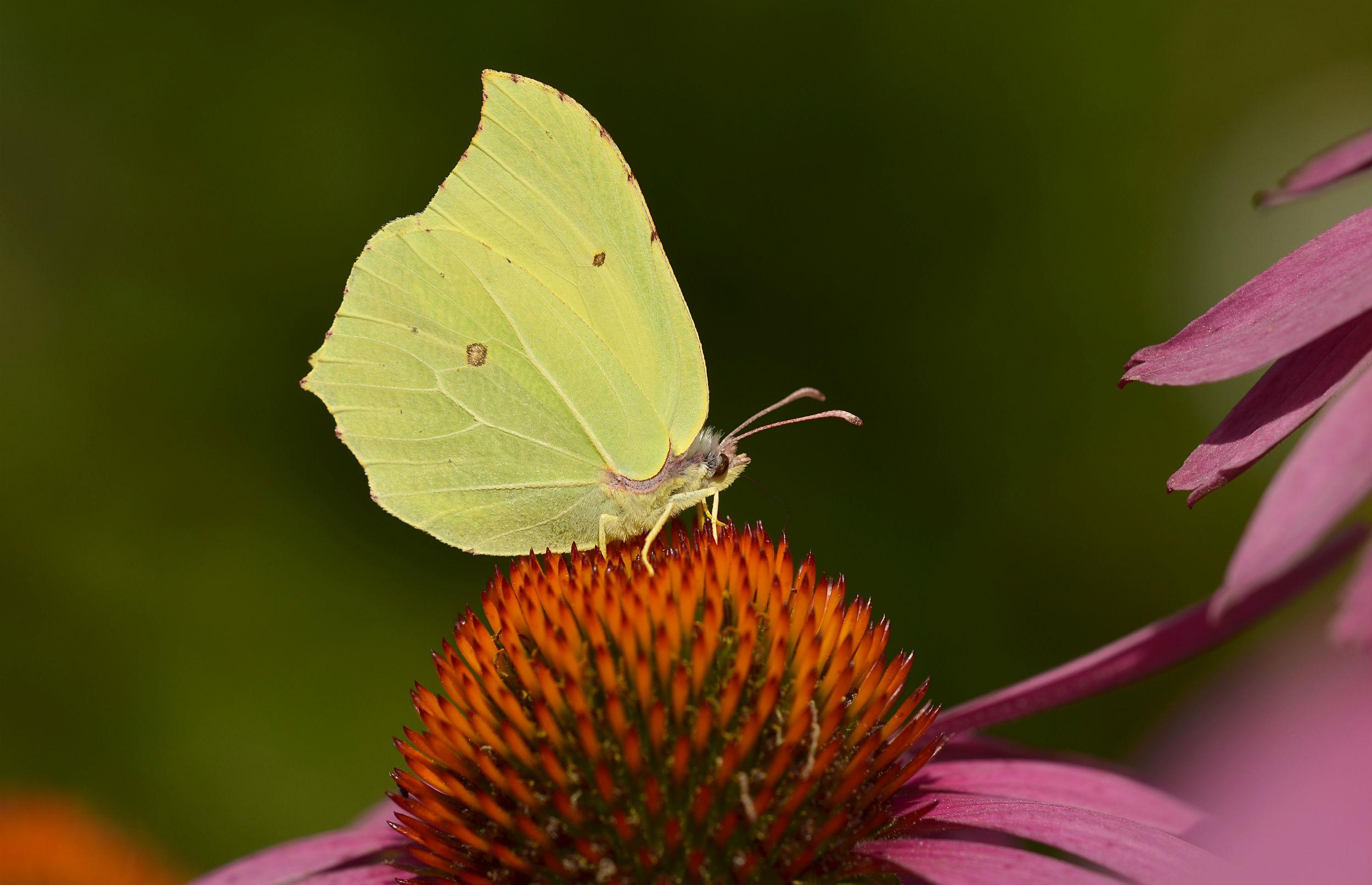 Lav et sommerfuglebed i haven