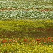 DN: Kræv klima, miljø & natur for en ellers håbløs landbrugsstøtte