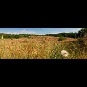Beskyttet natur: Danmark er europæisk bundskraber