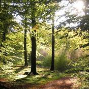 Video: Peter Mygind siger aldrig nej til en tur i naturen