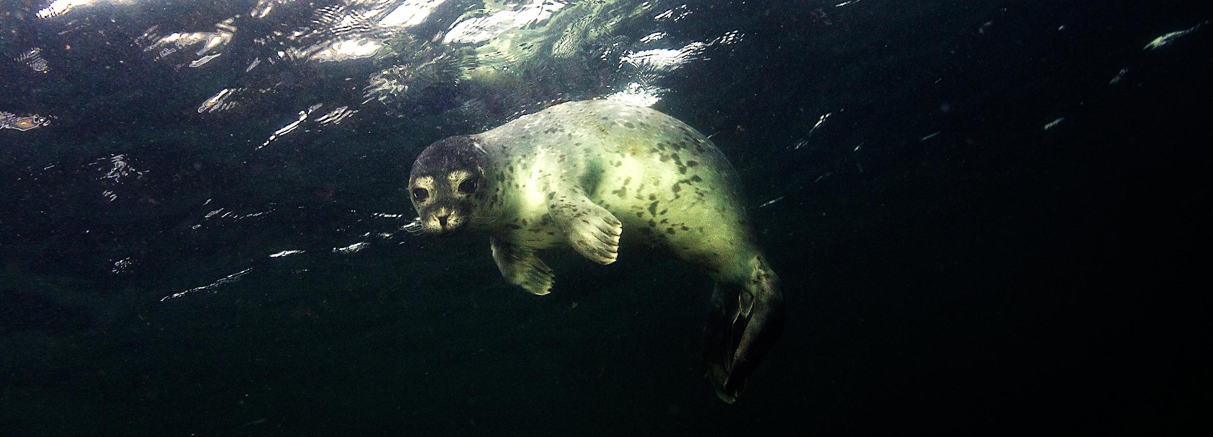 Ny havstrategi er en kæmpe maveplasker