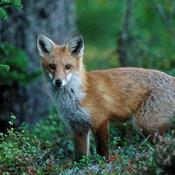 Giv en testamentegave til naturen i Danmark