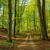 Jubel over ny klimamålsætning: Kan gøre os til grønt foregangsland