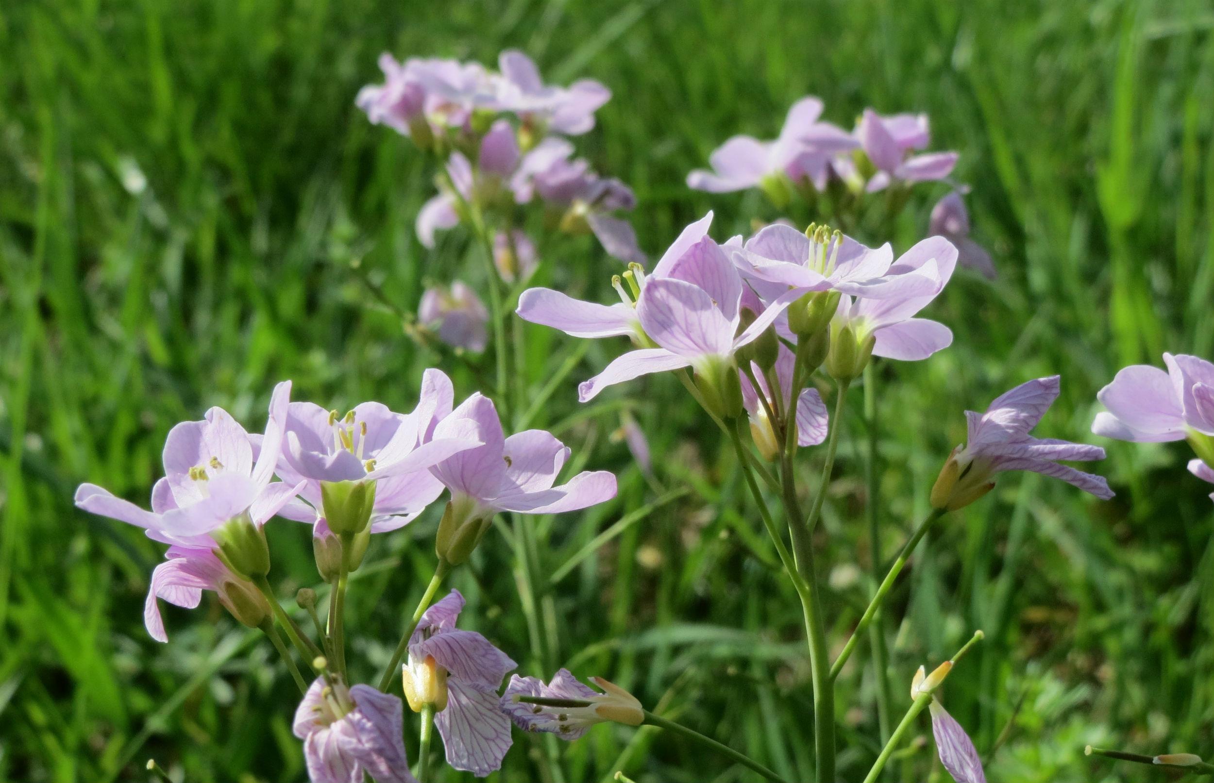 6 tips til en vild blomsterhave