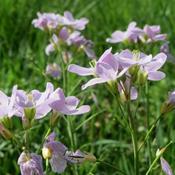 Seks tips til en vild blomsterhave