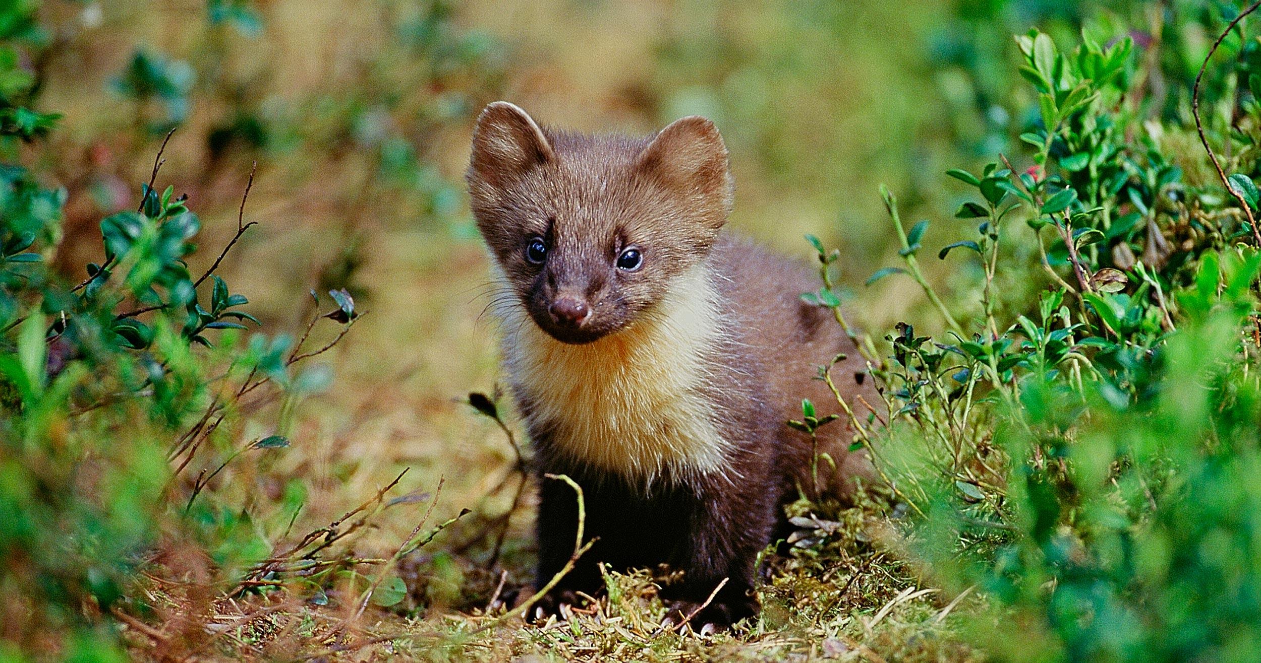 truede dyrearter i danmark