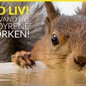 Tørken vil tage livet af mange dyr