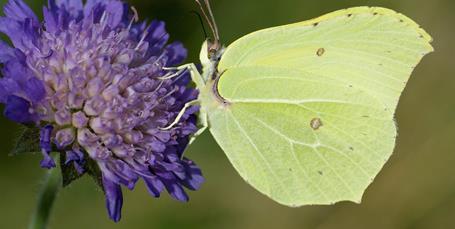 3 insekter du kan hjælpe i haven i det tidlige forår
