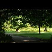 Fredninger skal sikre byernes parker