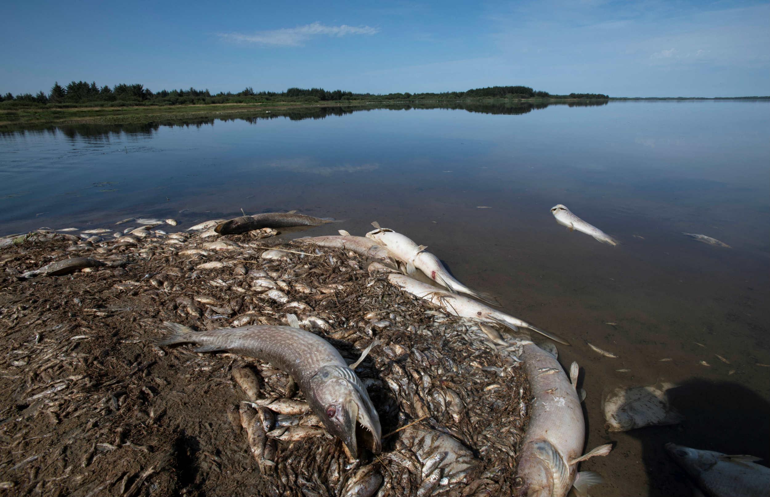 Massiv fiskedød: Vi skal passe bedre på vandmiljøet