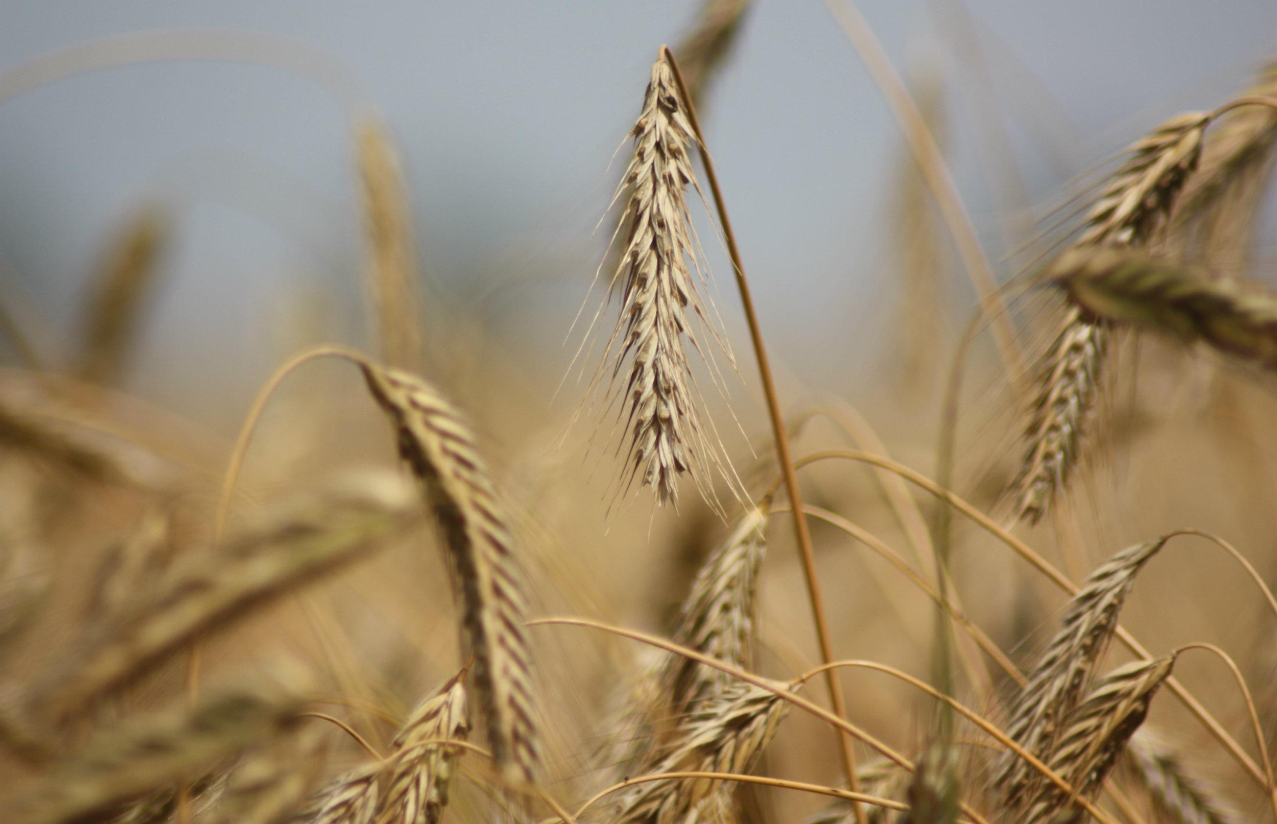 Danmarks Naturfredningsforening roser tørkepakke