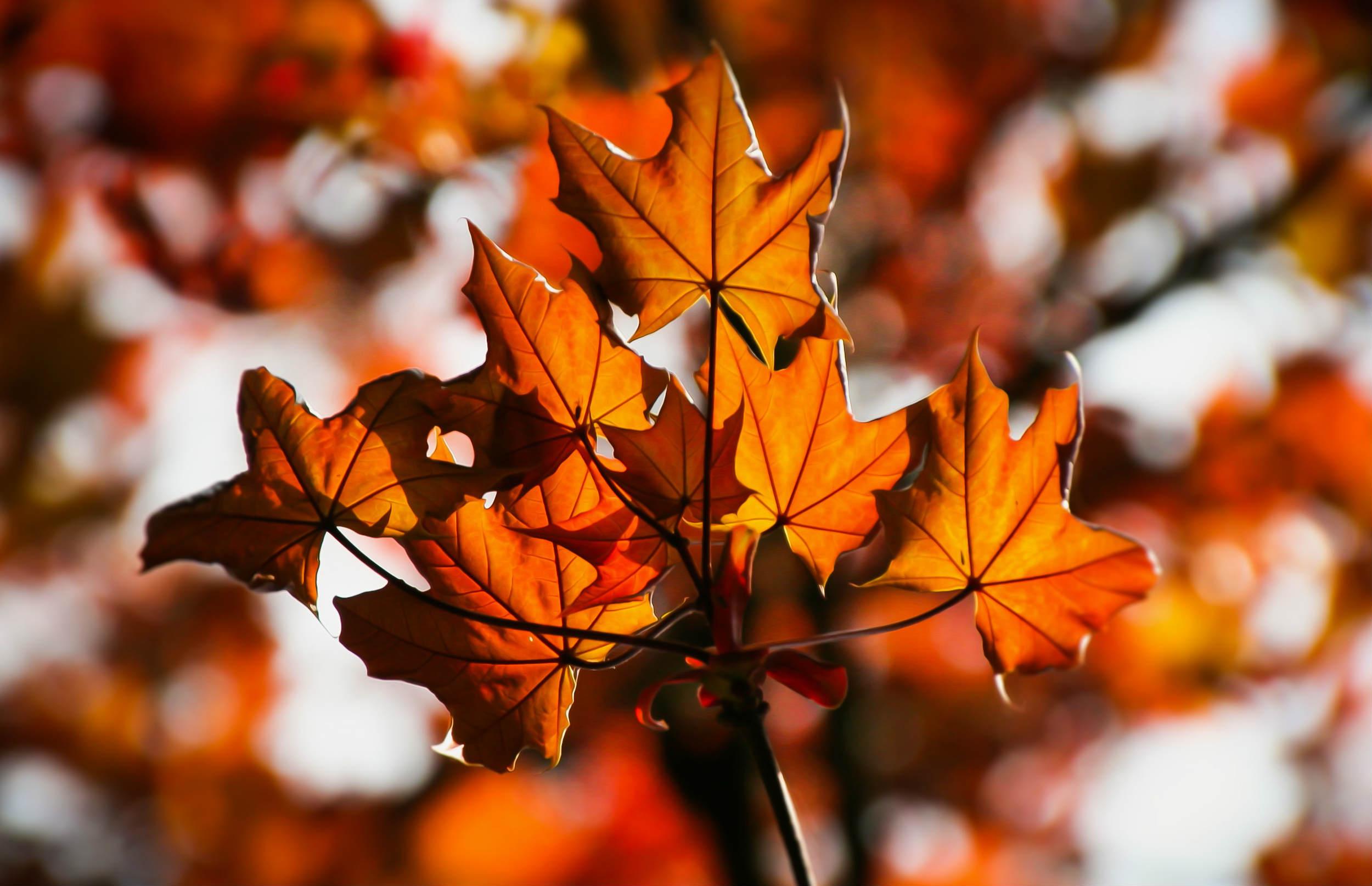 Eventyrligt efterår: 5 fantastiske steder i Danmark