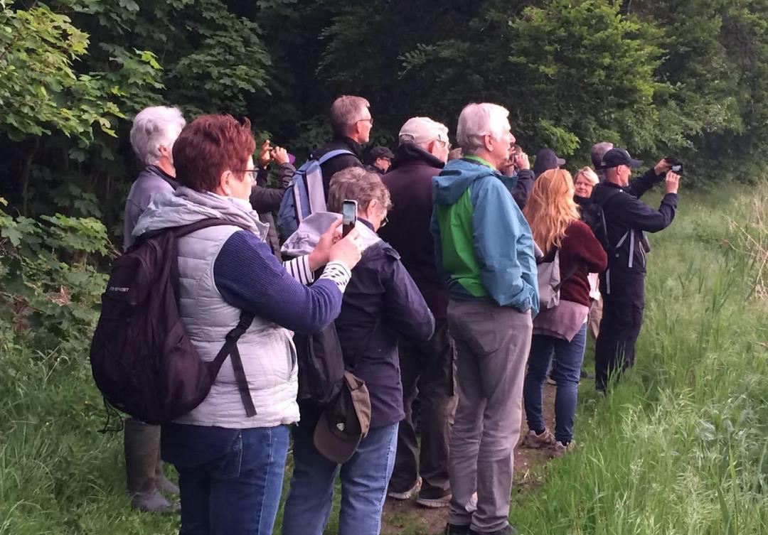 Morgenfugletur i Sonnerup Skov - OBS Tilmelding nødvendigt!