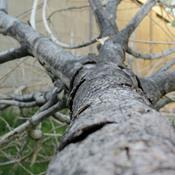 Efter stormen: Væltede træer gavner biodiversiteten
