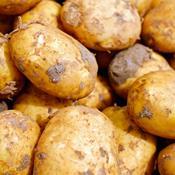 Disse 5 danske grøntsager indeholder oftest rester af sprøjtegift