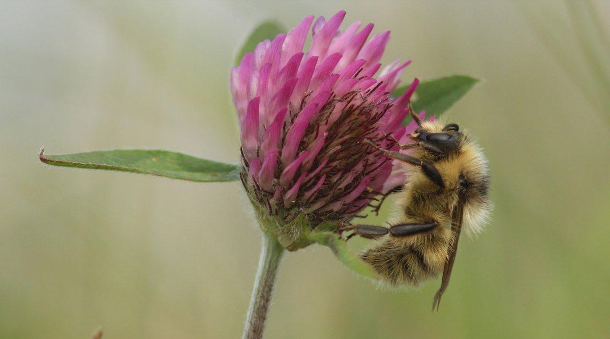Ny forskning: Verdens insekter er truede