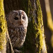 Private skovejere og naturforening vil styrke biodiversiteten i skovene