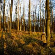 Ny begravelsestrend: Skoven kan blive dit sidste hvilested