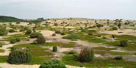 Vikariat: Klimapolitisk rådgiver i Danmarks Naturfredningsforening