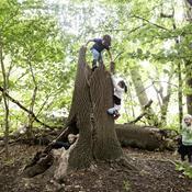 Tag ud i naturen på søndag: Over 300 arrangementer i Danmark