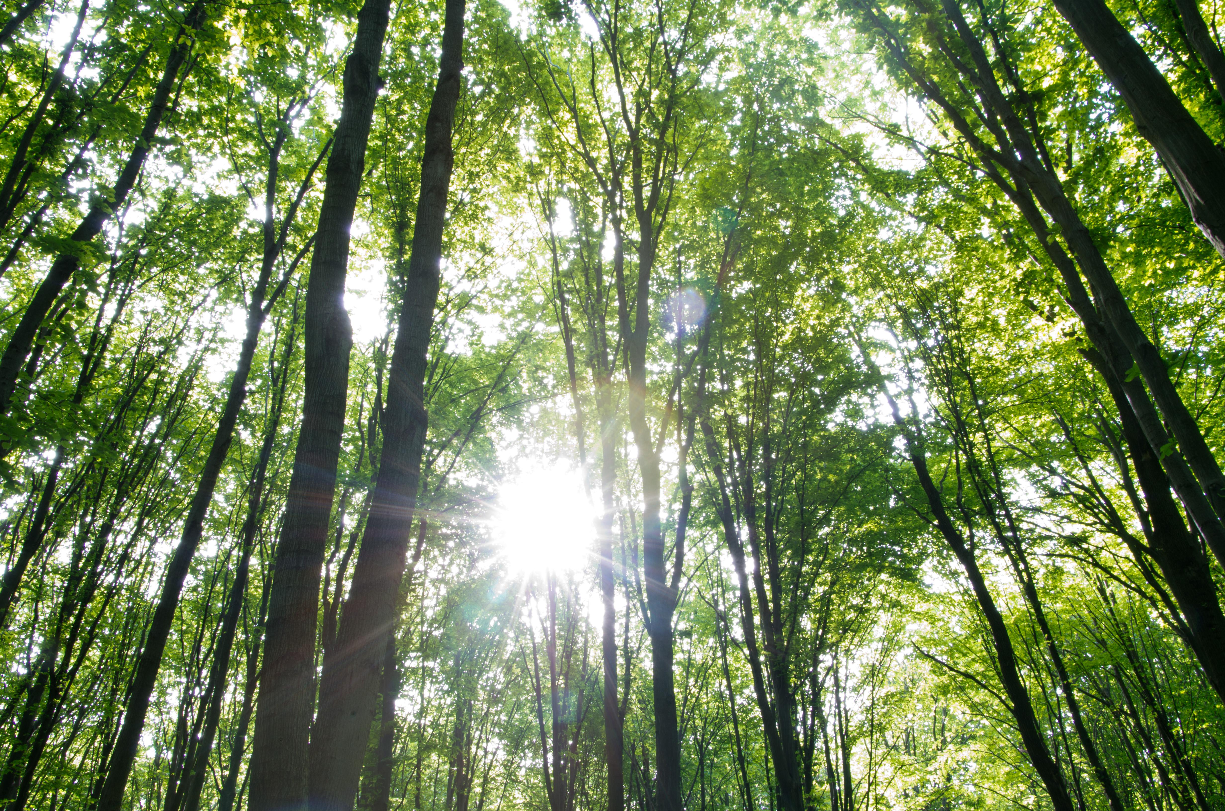 Resultatet er klar: Så meget blev der samlet ind til 'Danmark planter træer'